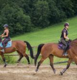 Equitation 1