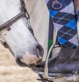 Equitation 4